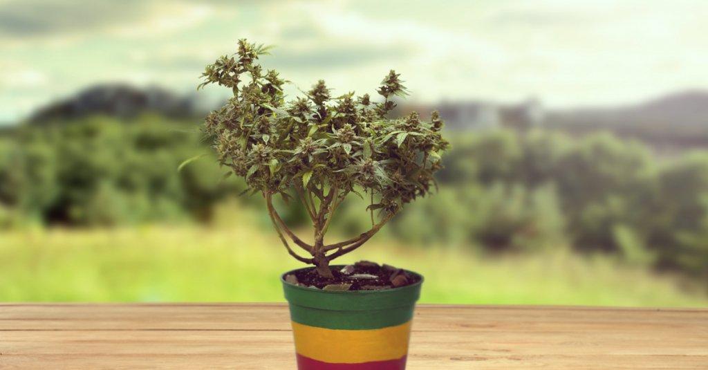 blockchain, bitcoin, cannabis, mercado, crecimiento, estados unidos, marco legal, comercio