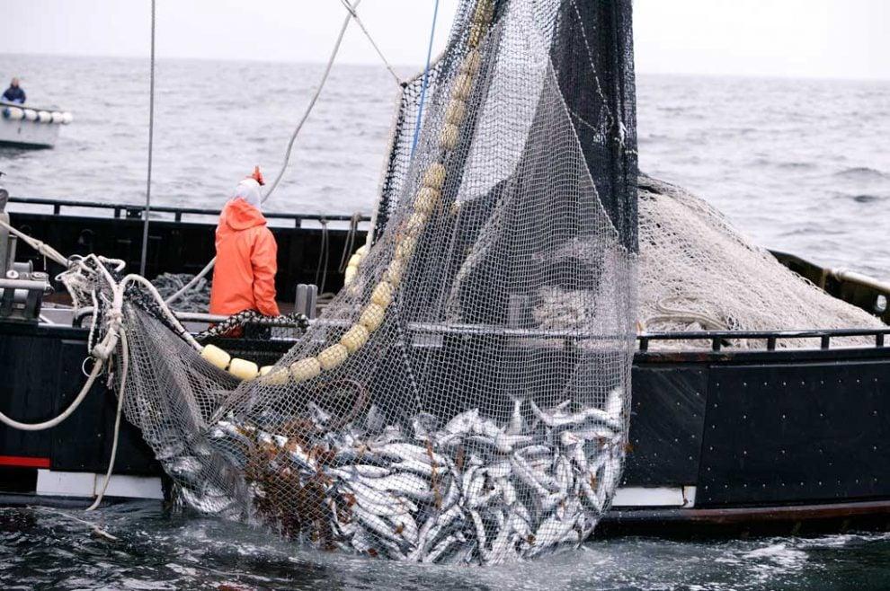 pesca, intel, blockchain, sawtooth lake, cadena suministros