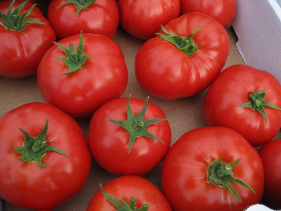 Banquero-ejecutivo-tomates-blockchain