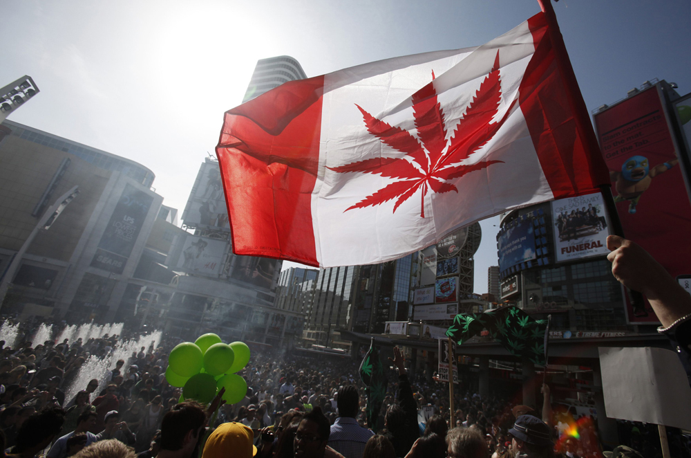 ibm, marihuana, cannabis, cadena de suministro, canada, blockchain