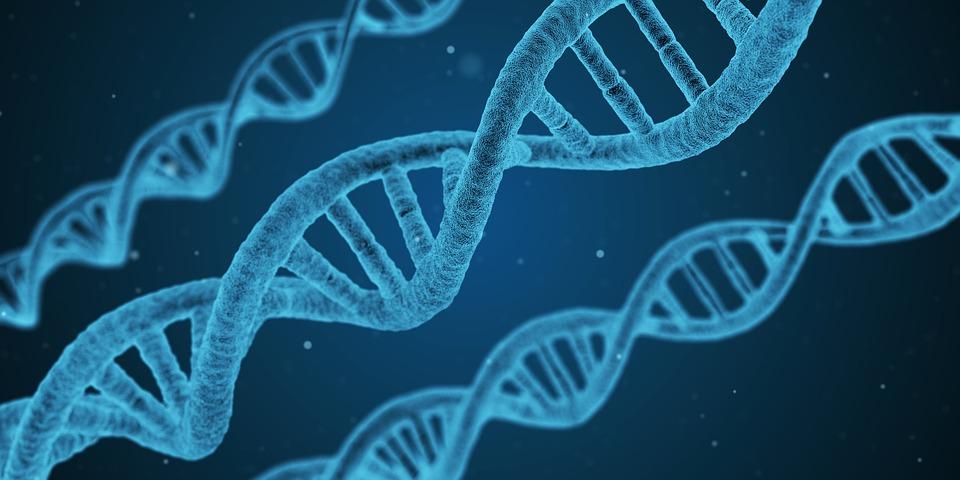 estado-andrha-pardesh-genoma