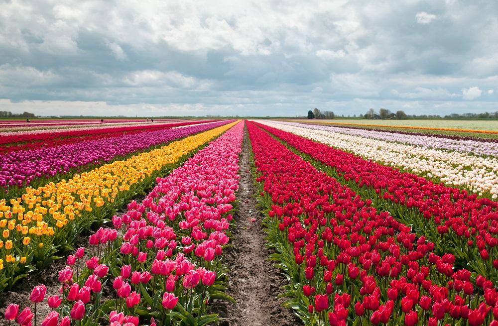 arte-digital-blockchain-texec-tulipanes