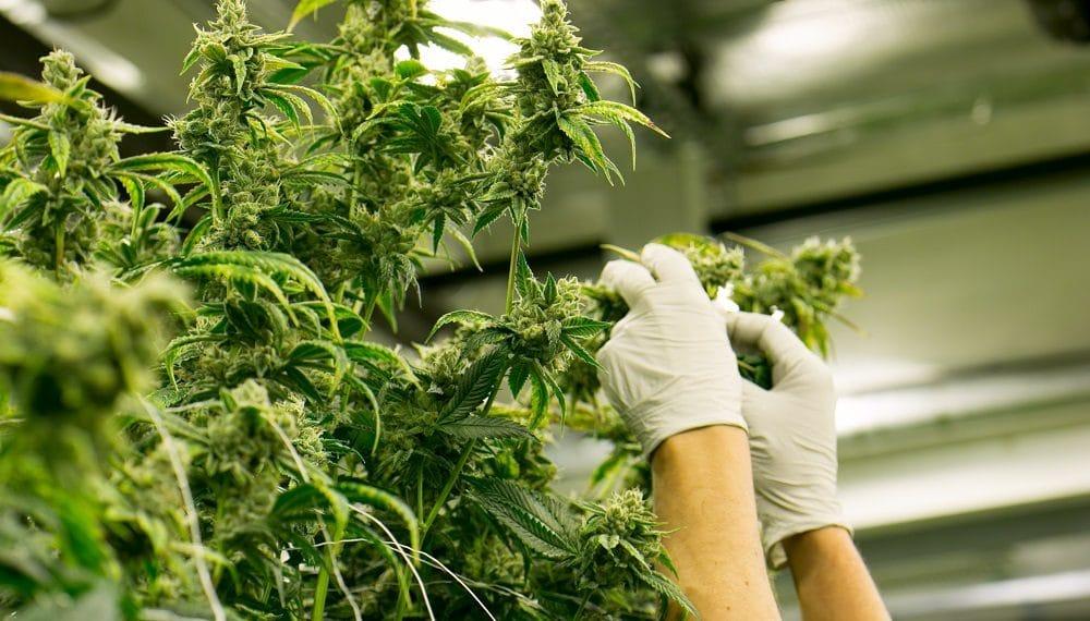 Imagen destacada por The Colonel/stock.adobe.com