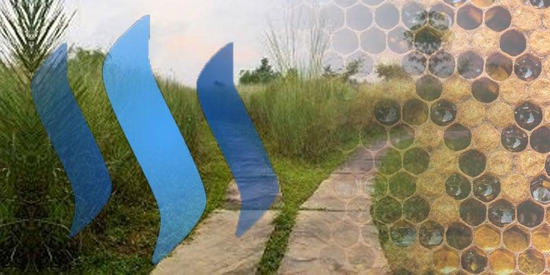 Imagen destacada: collage con imágenes por es.wikipedia.org, honeycolony.com y souncloud.com