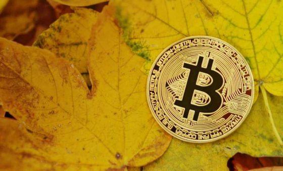 Número de direcciones con saldo de al menos 1 bitcoin alcanza un nuevo máximo histórico