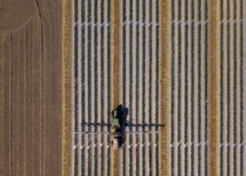 Un vehiculo echando pesticida a una plantación en linea recta. Fuente: wollwerth/ Envato Elements.