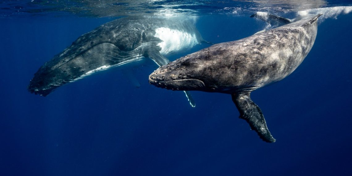 saldo-bitcoin-ballenas-instituciones