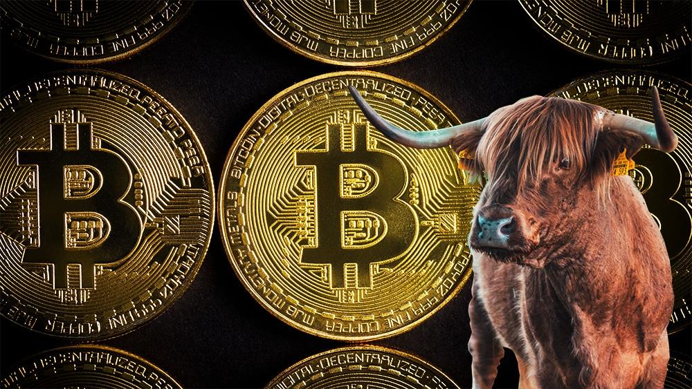bitcoin-corrida-alcista-Willy-Woo