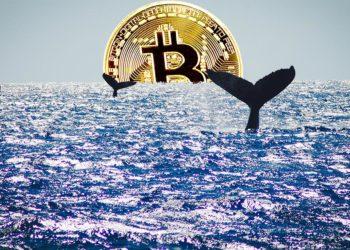 Ballenas nadando en el mar con moneda de bitcoin en el horizonte. Composición por CriptoNoticias. johan10 / elements.envato.com; twenty20photos / elements.envato.com