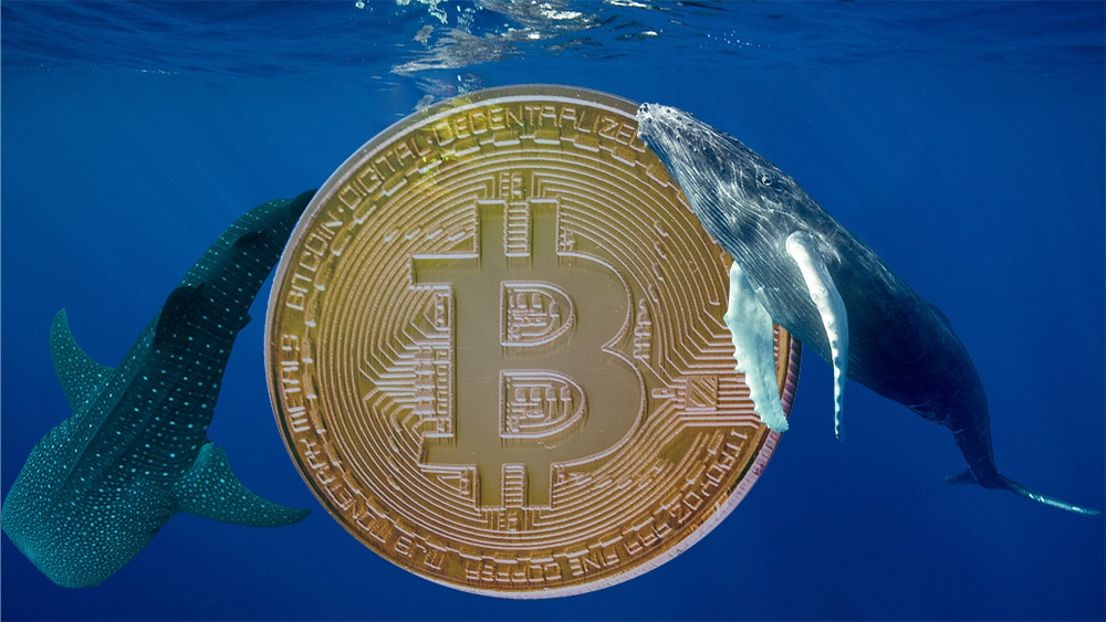 Moneda de bitcoin rodeado de ballenas. Composición por CriptoNoticias. gargantiopa / elements.envato.com; pcowell / elements.envato.com; Mint_Images / elements.envato.com