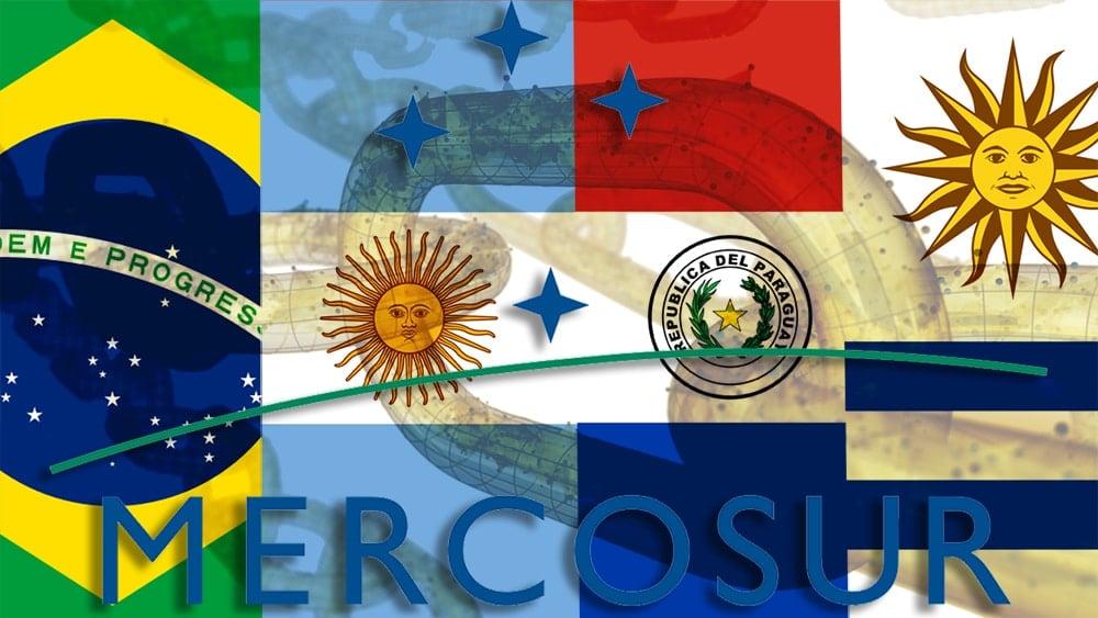 Banderas de miembros del Mercosur con blockchain superpuesta y logo de Mercosur. Composición por CriptoNoticias. iLexx / elements.envato.com; Anomie / wikipedia.org; Fvasconcellos / wikimedia.org; manuelbelgrano / wikipedia.org; Paraguay / wikipedia.org; Vexilla Mundi: Uruguay / wikimedia.org