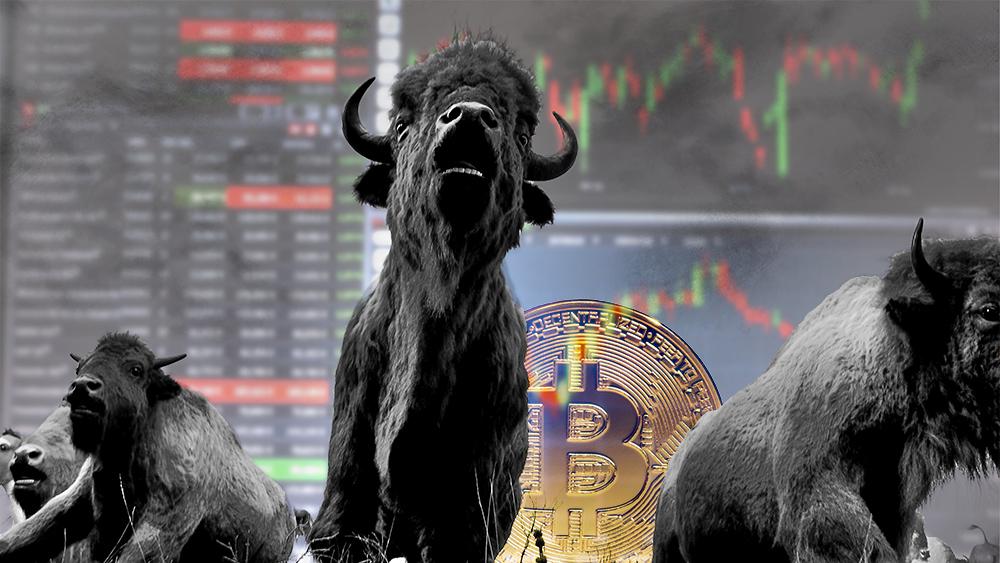 Estampida de toros con interfaz de exchange y moneda de bitcoin en el fondo. Composición por CriptoNoticias. ESchweitzer / elements.envato.com; sbqhw / piqsels.com; twenty20photos / elements.envato.com