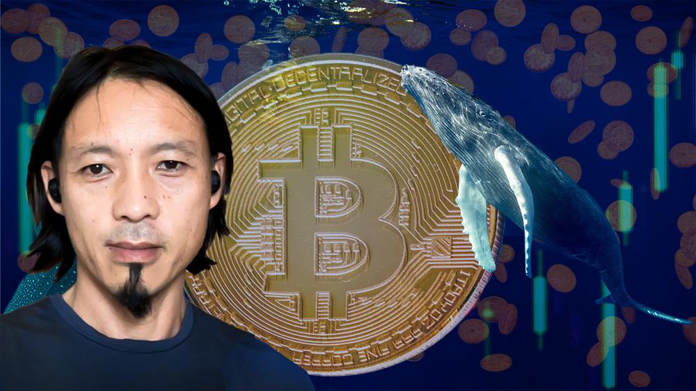 Willy Woo frente a moneda de bitcoin rodeada por ballenas con frágfico de mercado y monedas cayendo en el fondo. Composición por CrioptoNoticias. dibrova / elements.envato.com; jcomp / freepik.com; Unchained Podcast / unchainedpodcast.com; CriptoNoticias / criptonoticias.com.