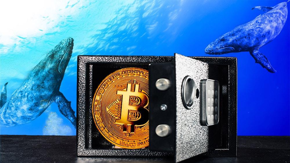 hodlres bitcoin acumulación criptomonedas direcciones poco balance