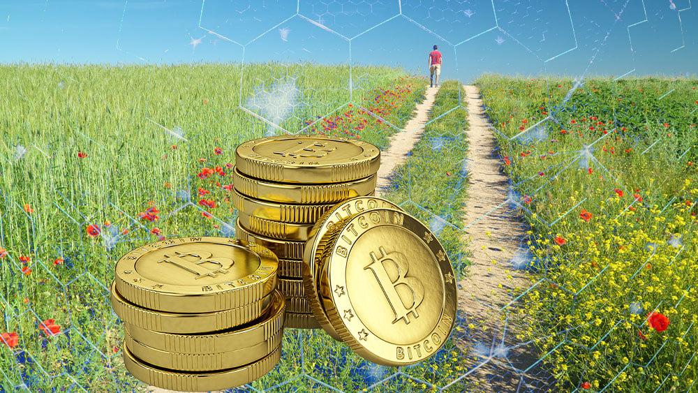bitcoin red hombre camino