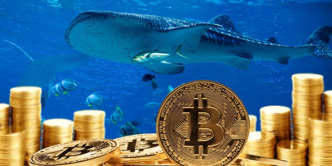 Pilas de bitcoins y ballena al fondo.