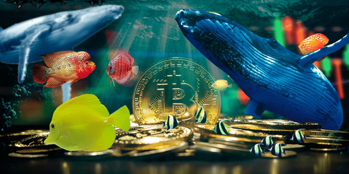 Bitcoin entre animales marinos.