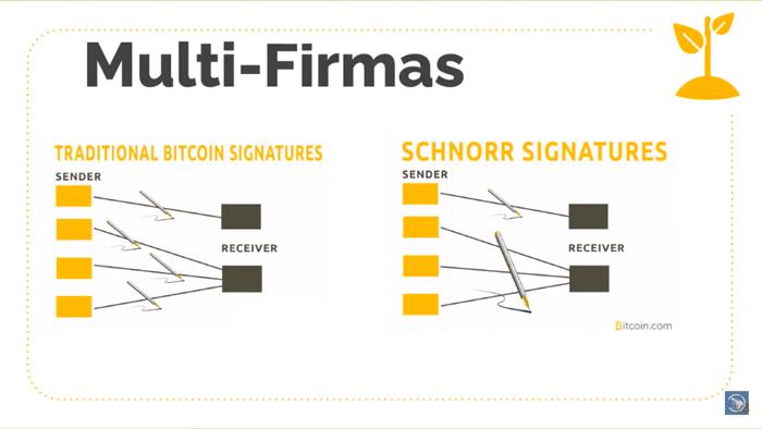 drangosh-multi-firmas