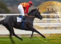 Carrera caballo, ETF y BTC.