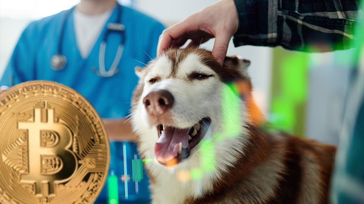El Salvador construirá hospital veterinario con ganancias de bitcoin thumbnail